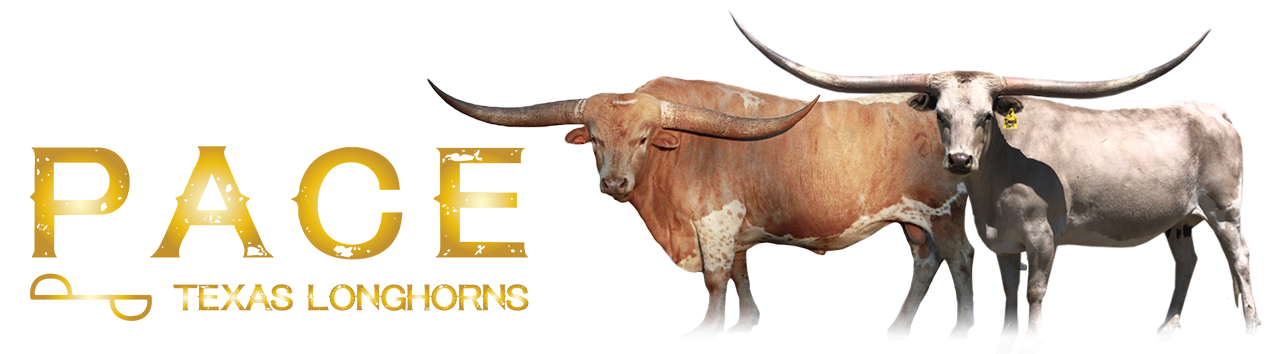 Pace Texas Longhorns Logo